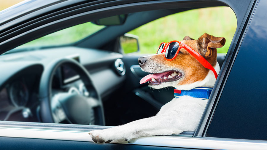 Best Cars For Dogs To Travel In